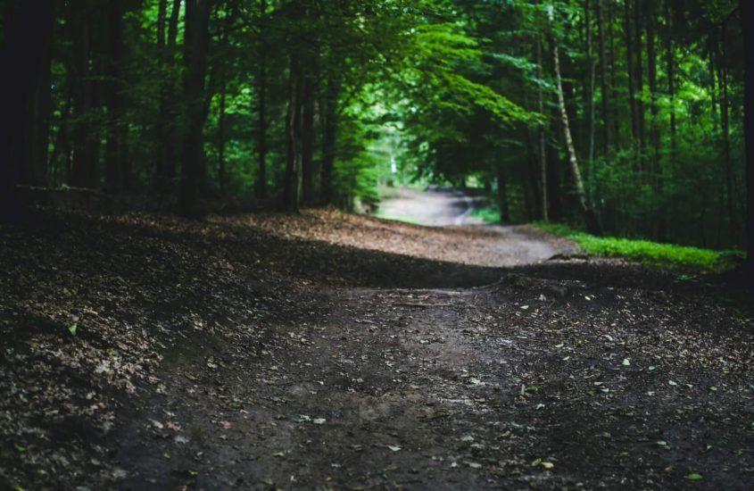 Jak wybrać buty do biegania po lesie?