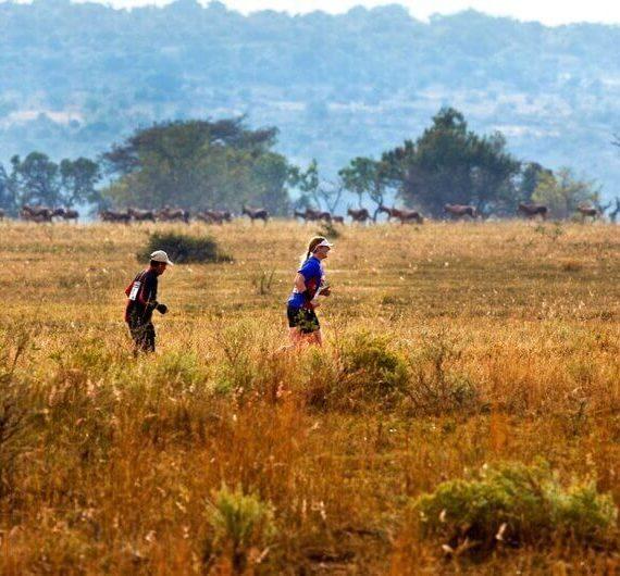 ciekawa impreza biegowa na safari